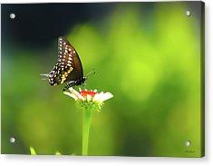 Butterfly Sunshine Acrylic Print
