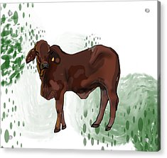 C Is For Cow Acrylic Print