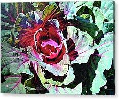 Cabbage Acrylic Print