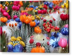 Acrylic Print featuring the photograph Cacti Flowers by Top Wallpapers