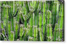 Acrylic Print featuring the photograph Cacti Wall by Top Wallpapers