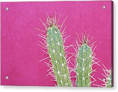 Cactus Against A Bright Pink Wall Acrylic Print