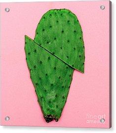 Cactus On Pink Background. Minimal Acrylic Print