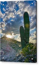 Cactus Portrait  Acrylic Print