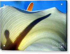 Calla Aethiopica Detail Acrylic Print