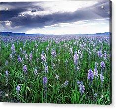 Camas Marsh 2 Acrylic Print by Leland D Howard