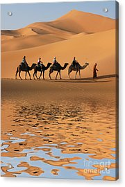 Camel Caravan Going Along The Lake The Acrylic Print