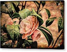Camellia Grunge Acrylic Print