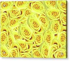 Candlelight Roses Acrylic Print