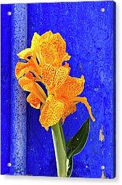 Canna Azure Acrylic Print