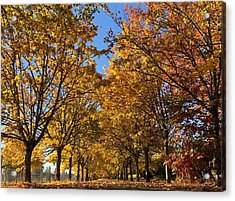 Canopy Of Color Acrylic Print