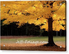 Canopy Of Gold Fall Colors Acrylic Print