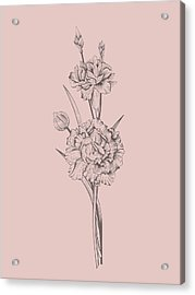 Carnation Blush Pink Flower Acrylic Print
