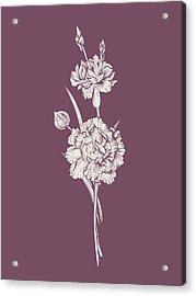 Carnation Purple Flower Acrylic Print