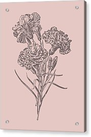 Carnations Bush Pink Flower Acrylic Print