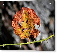 Acrylic Print featuring the photograph Carved Pumpkin Leaf At Gordon's Pond by Bill Swartwout Fine Art Photography