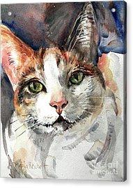 Cat In Watercolor Acrylic Print