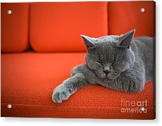 Cat Relaxing On The Couch Acrylic Print