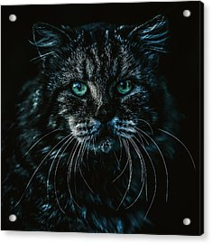 Acrylic Print featuring the photograph Cat by Rob D