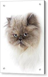 Cat With Long Hair Acrylic Print by Www.wm Artphoto.se