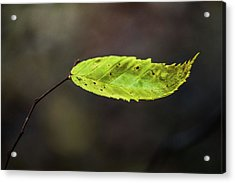 Acrylic Print featuring the photograph Catching Raindrops  by Michael Arend