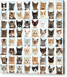 Acrylic Print featuring the photograph Cats Or Chess by Warren Photographic
