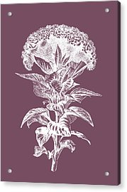 Celosia Purple Flower Acrylic Print