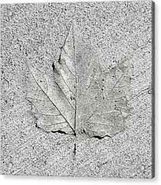 Cement Leaf Acrylic Print