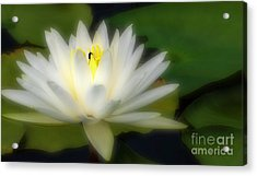 Center Of Attenion Acrylic Print