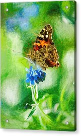 Chalky Painted Lady Butterfly Acrylic Print