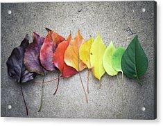 Change Acrylic Print by Jeff Minarik Photography - Chicago,il