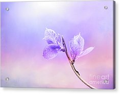 Charming Baby Leaves In Purple Acrylic Print