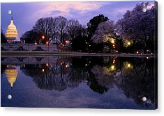 Cherry Blossom At Capitol Hill Acrylic Print by Patrick Yuen