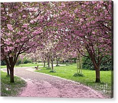 Cherry Blossom In Spring Acrylic Print