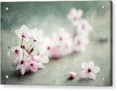 Acrylic Print featuring the photograph Cherry Blossoms by Nicole Young