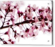 Cherry Triptych Center Panel Acrylic Print