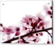 Cherry Triptych Left Panel Acrylic Print