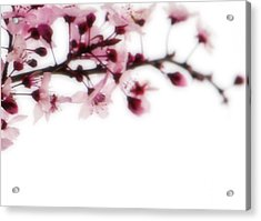 Cherry Triptych Right Panel Acrylic Print