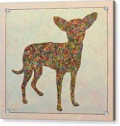 Chihuahua-shape Acrylic Print