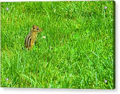 Chipmunk And The Flower Acrylic Print