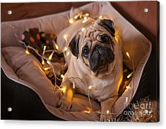 Christmas Dog With Garland In Bed On Acrylic Print