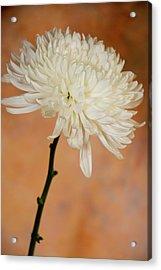 Chrysanthemum On Canvas Acrylic Print