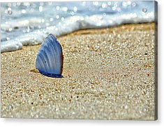 Acrylic Print featuring the photograph Clamshell On The Beach At Assateague Island by Bill Swartwout Fine Art Photography
