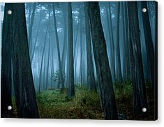 Clearing In Cypress Tree Forest Acrylic Print by Siri Stafford