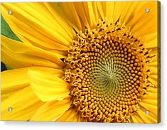 Close-up Of Sunflower Acrylic Print by Andreas Naumann / Eyeem