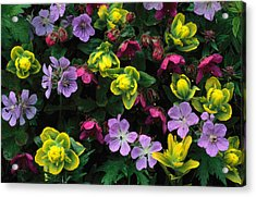 Coastal Paintbrush, Wild Geranium And Acrylic Print