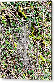 Acrylic Print featuring the photograph Cobweb Study 1 by Dorothy Berry-Lound