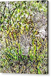 Acrylic Print featuring the photograph Cobweb Study 2 by Dorothy Berry-Lound
