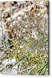 Acrylic Print featuring the photograph Cobweb Study 4 by Dorothy Berry-Lound