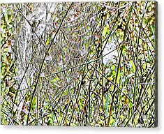 Acrylic Print featuring the photograph Cobweb Study 5 by Dorothy Berry-Lound